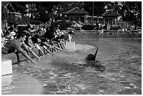 People reaching for dolphin, Dolphin Point. SeaWorld San Diego, California, USA ( black and white)