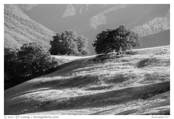 Oaks and hills, Temblor Range. California, USA (black and white)