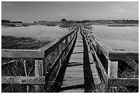 Boardwalk, Elkhorn Slough. California, USA ( black and white)