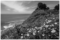 Poppies and motel rooms overlooking Pacific Ocean, Lucia. Big Sur, California, USA ( black and white)