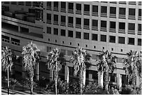 Palm trees, and Adobe building from above. San Jose, California, USA ( black and white)