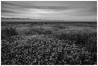 Pictures of Carrizo Plain National Monument