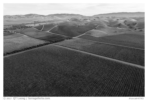 Aerial view of multicolored vineyards and hills in the fall. Livermore, California, USA (black and white)