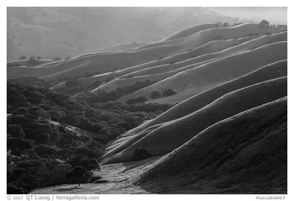Oaks and ridges, late afternoon, Del Valle Regional Park. Livermore, California, USA (black and white)