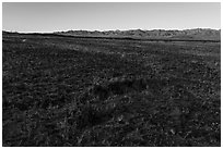 Grasses and Granite Mountains near Amboy. Mojave Trails National Monument, California, USA ( black and white)