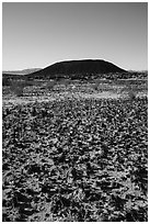 Volcanic rocks, grasses, and Amboy Crater. Mojave Trails National Monument, California, USA ( black and white)