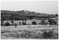 Desert grassland and New York Mountains at sunrise. Castle Mountains National Monument, California, USA ( black and white)
