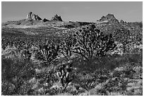 Joshua Trees and Castle Peaks. Castle Mountains National Monument, California, USA ( black and white)