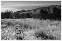 Grassy meadow and San Gorgonio Mountain in winter, Big Morongo Canyon Preserve. Sand to Snow National Monument, California, USA ( black and white)