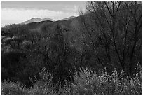 Bare trees and San Gorgonio Mountain in winter, Big Morongo Canyon Preserve. Sand to Snow National Monument, California, USA ( black and white)