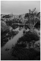 Mojave River crossing at sunrise. Mojave Trails National Monument, California, USA ( black and white)