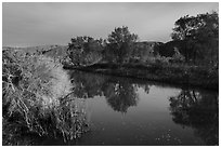 Cottonwood trees reflected in Mojave River. Mojave Trails National Monument, California, USA ( black and white)
