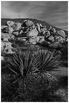 Yucca and boulders, Flat Top Butte. Sand to Snow National Monument, California, USA ( black and white)