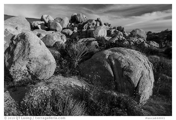 Wildflowers, yucca and boulders, Flat Top Butte. Sand to Snow National Monument, California, USA (black and white)