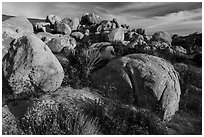 Wildflowers, yucca and boulders, Flat Top Butte. Sand to Snow National Monument, California, USA ( black and white)