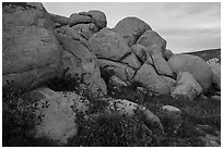 Wildflowers and boulders. Sand to Snow National Monument, California, USA ( black and white)
