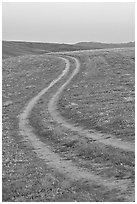 Curvy tire tracks in a wildflower meadow. Antelope Valley, California, USA (black and white)