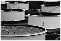 Oil tanks,  ConocoPhillips refinery, Rodeo. San Pablo Bay, California, USA (black and white)