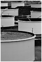 Storage citerns, Rodeo San Francisco Oil Refinery. San Pablo Bay, California, USA (black and white)