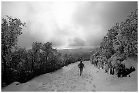 Summit trail after a snow-storm, Mt Diablo State Park. California, USA ( black and white)
