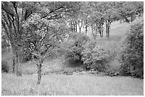 Meadow with flowers,  creek, and trees in spring, Mt Diablo State Park. California, USA ( black and white)