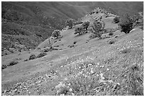 Poppies and ridge, Mt Diablo State Park. California, USA ( black and white)