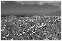 Meadows in the spring, with the Pacific ocean in the distance,  Russian Ridge Open Space Preserve. Palo Alto,  California, USA (black and white)