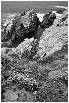 Pinnacle Cove and wildflowers. Point Lobos State Preserve, California, USA (black and white)