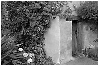 Flowers and wall of Mission. Carmel-by-the-Sea, California, USA ( black and white)