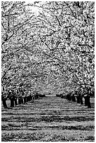 Pictures of Orchards