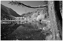 Pond and trees in fall colors, Lundy Canyon, Inyo National Forest. California, USA (black and white)