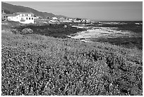 Wildflower field and village, Shelter Cove, Lost Coast. California, USA ( black and white)
