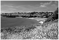 Spring wildflowefrs and Ocean, town on a bluff. Mendocino, California, USA ( black and white)
