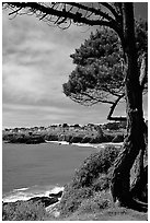 Tree, ocean, town on a bluff. Mendocino, California, USA ( black and white)
