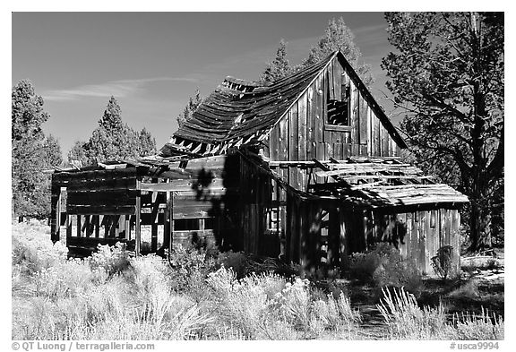 Abandoned wooden cabin. California, USA