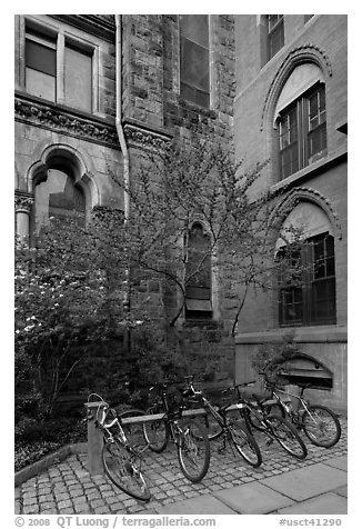 Redbud and bicycles in building corner. Yale University, New Haven, Connecticut, USA