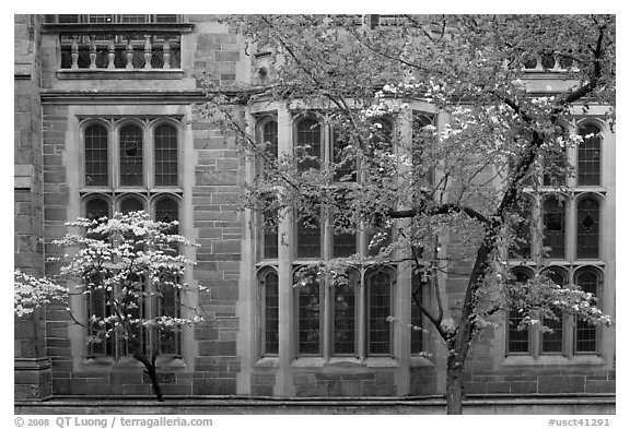 Spring leaves, blooms, and facade detail. Yale University, New Haven, Connecticut, USA