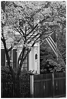 Tree in bloom, white facade, and flag, Essex. Connecticut, USA (black and white)