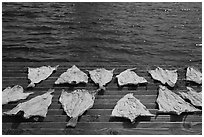 Fish flakes. Mystic, Connecticut, USA (black and white)