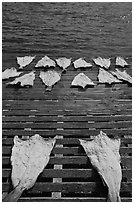 Drying slabs of fish. Mystic, Connecticut, USA (black and white)