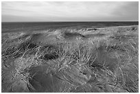 Dune grass, late afternoon, Race Point Beach, Cape Cod National Seashore. Cape Cod, Massachussets, USA (black and white)