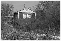 Cottage and bare shrubs, Truro. Cape Cod, Massachussets, USA ( black and white)