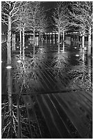 Reflected trees at night. Boston, Massachussets, USA (black and white)
