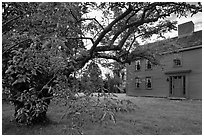 Tree and Samuel Brooks House, Minute Man National Historical Park. Massachussets, USA (black and white)