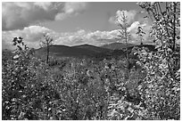 Autumn landscape with colorful leaves and distant mountains. Maine, USA ( black and white)