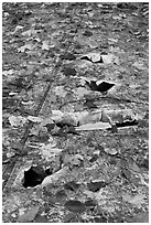 Close-up of aicraft wreck with fallen leaves. Maine, USA (black and white)