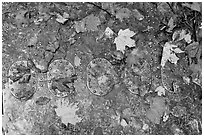 Detail of B-52 airplane part with fallen leaves. Maine, USA (black and white)