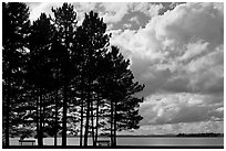 Conifers silhouette and clouds, Lily Bay State Park. Maine, USA (black and white)
