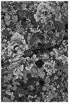 Lichen-covered rocks. Baxter State Park, Maine, USA (black and white)