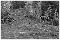 Clear cut gully in forest. Maine, USA (black and white)
